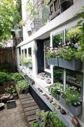 plants growing in troughs under window